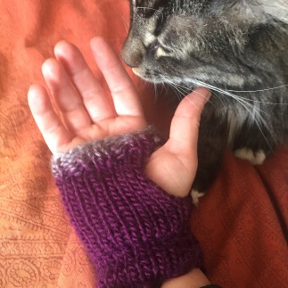 Sample from Beginner Knitting 2 class. Cat not included in class packages.